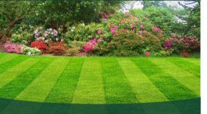 Lawn-Care-Main