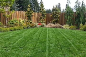 Lawn Care & Lawn Service